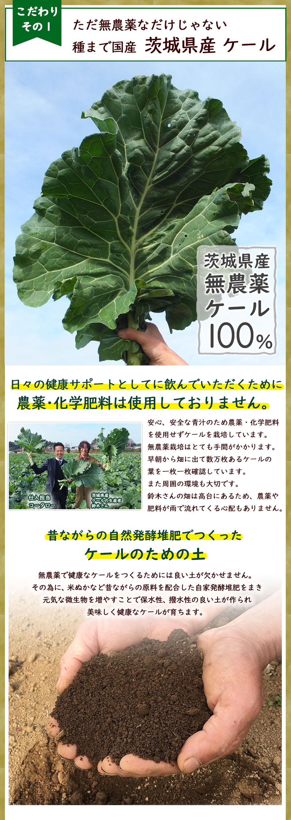 茨城県産無農薬ケール