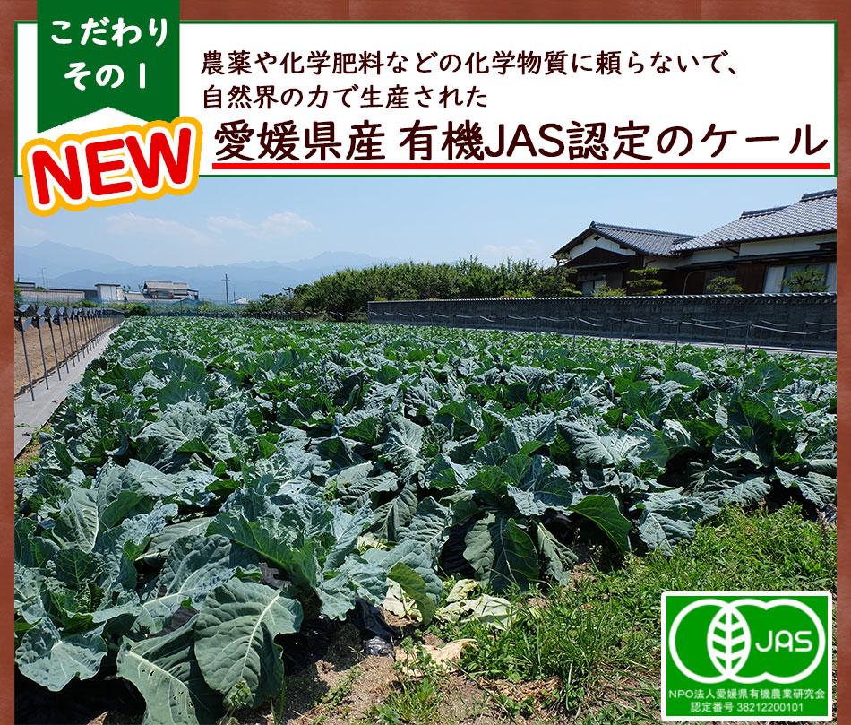 愛媛県無農薬ケール