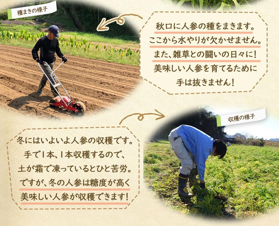 土づくりが肝心 ピカイチ野菜くんの農場