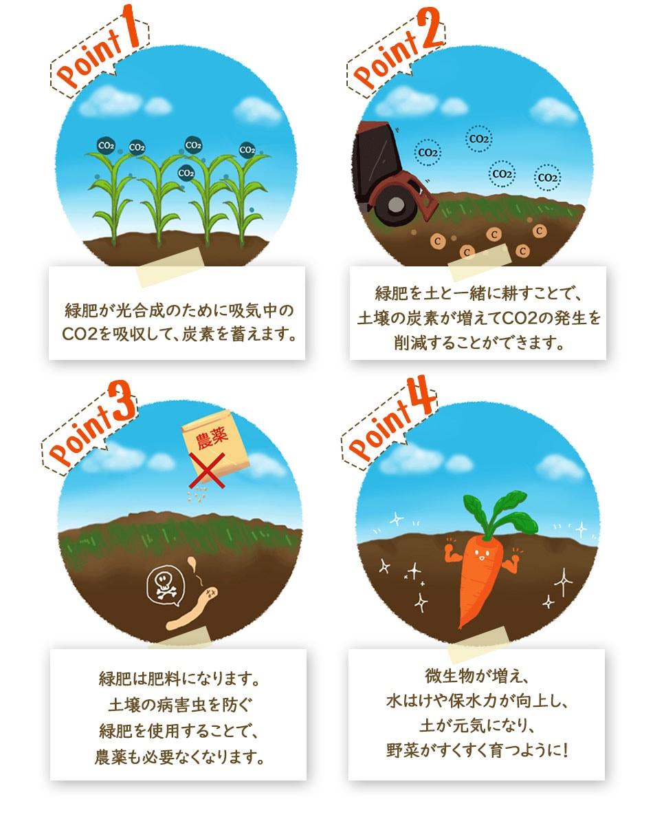 緑肥栽培のポイント