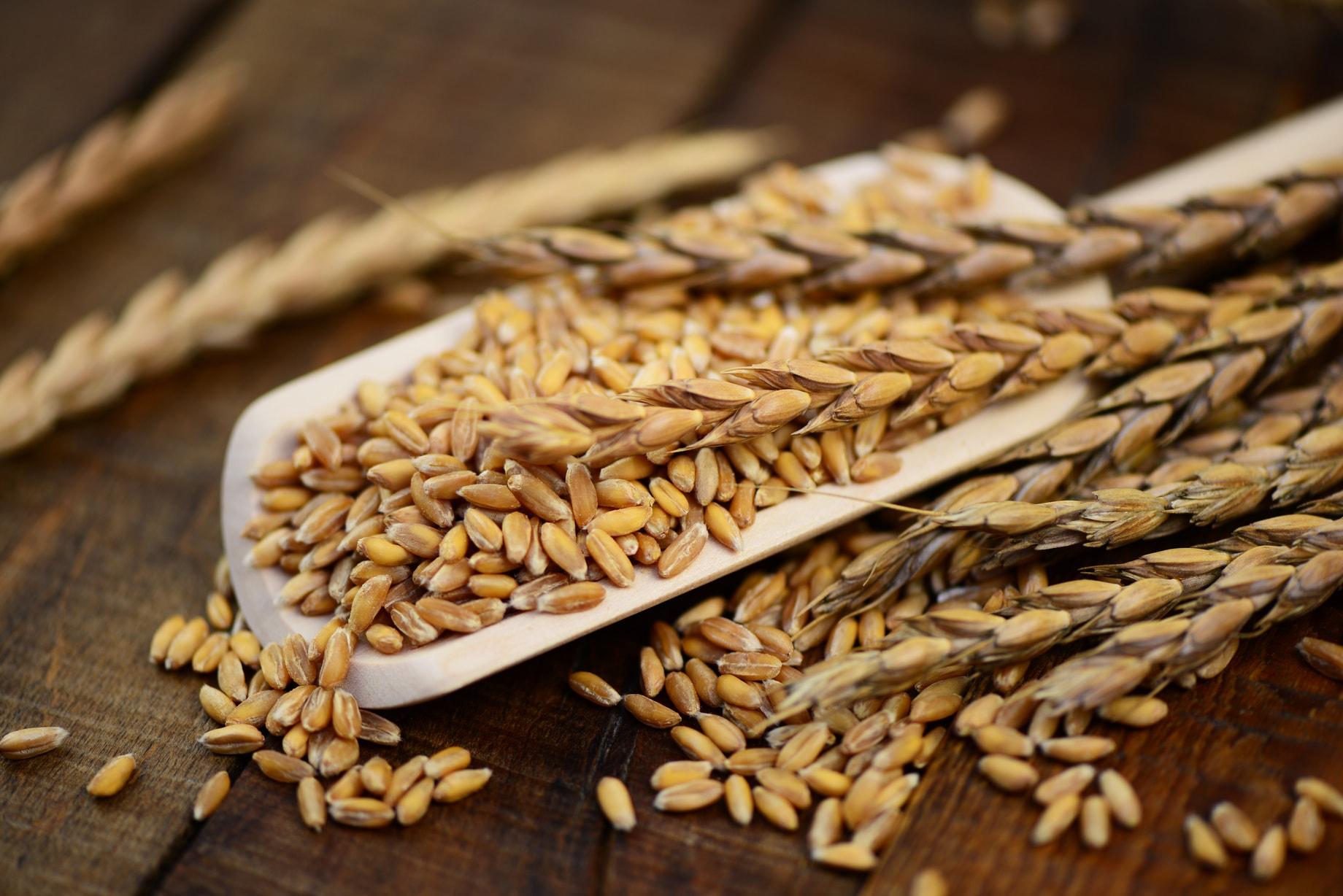 ディンケル小麦,スペルト小麦