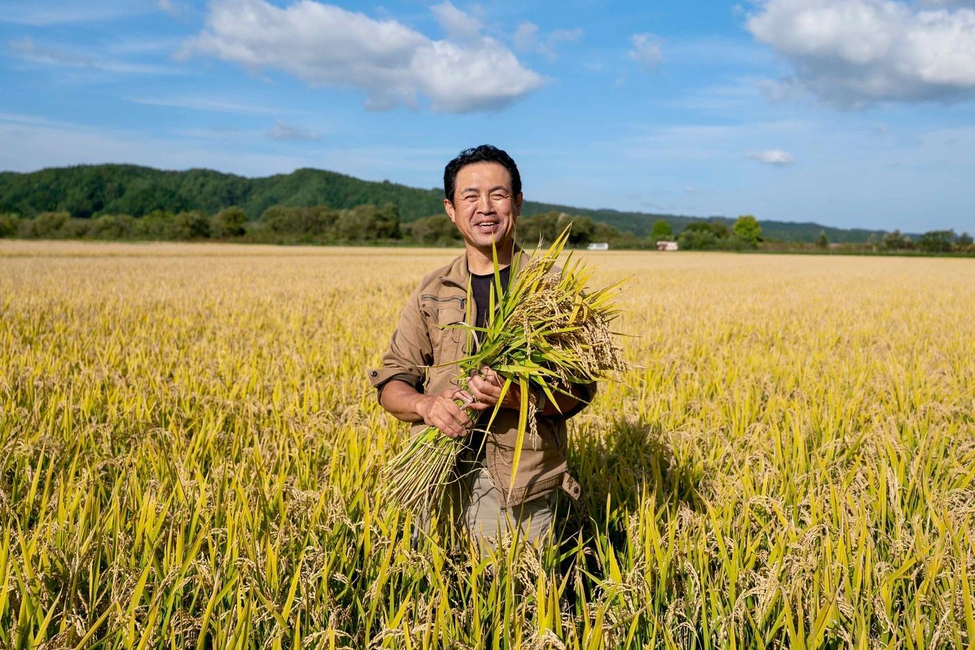 北海道むかわ町の小坂農園,黄金色の稲穂に囲まれた小坂さん