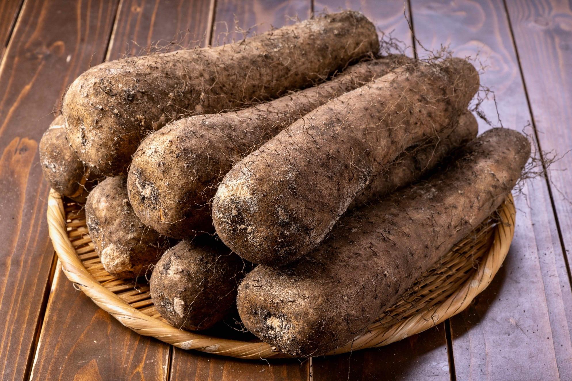 竹ざるのに山盛りの北海道産ダルマイモ,粘りの強い長いも