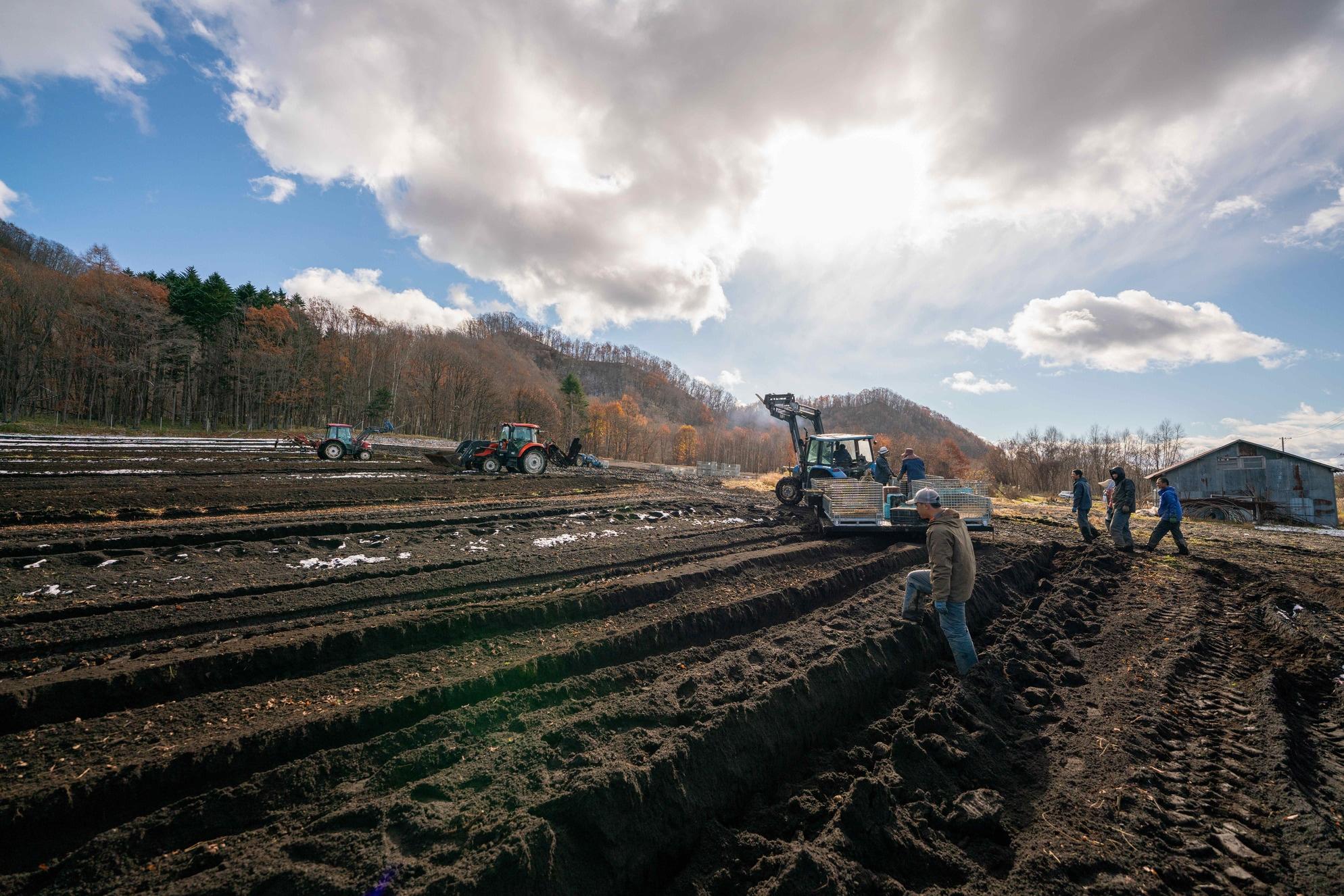 北海道むかわ町穂別の四代目中澤農園のだるま芋畑,長芋の収穫風景