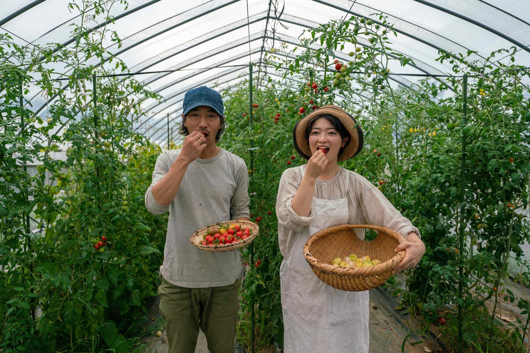 北海道蘭越町rural farm(ルーラルファーム)の高張ご夫妻,ミニトマトを食べる