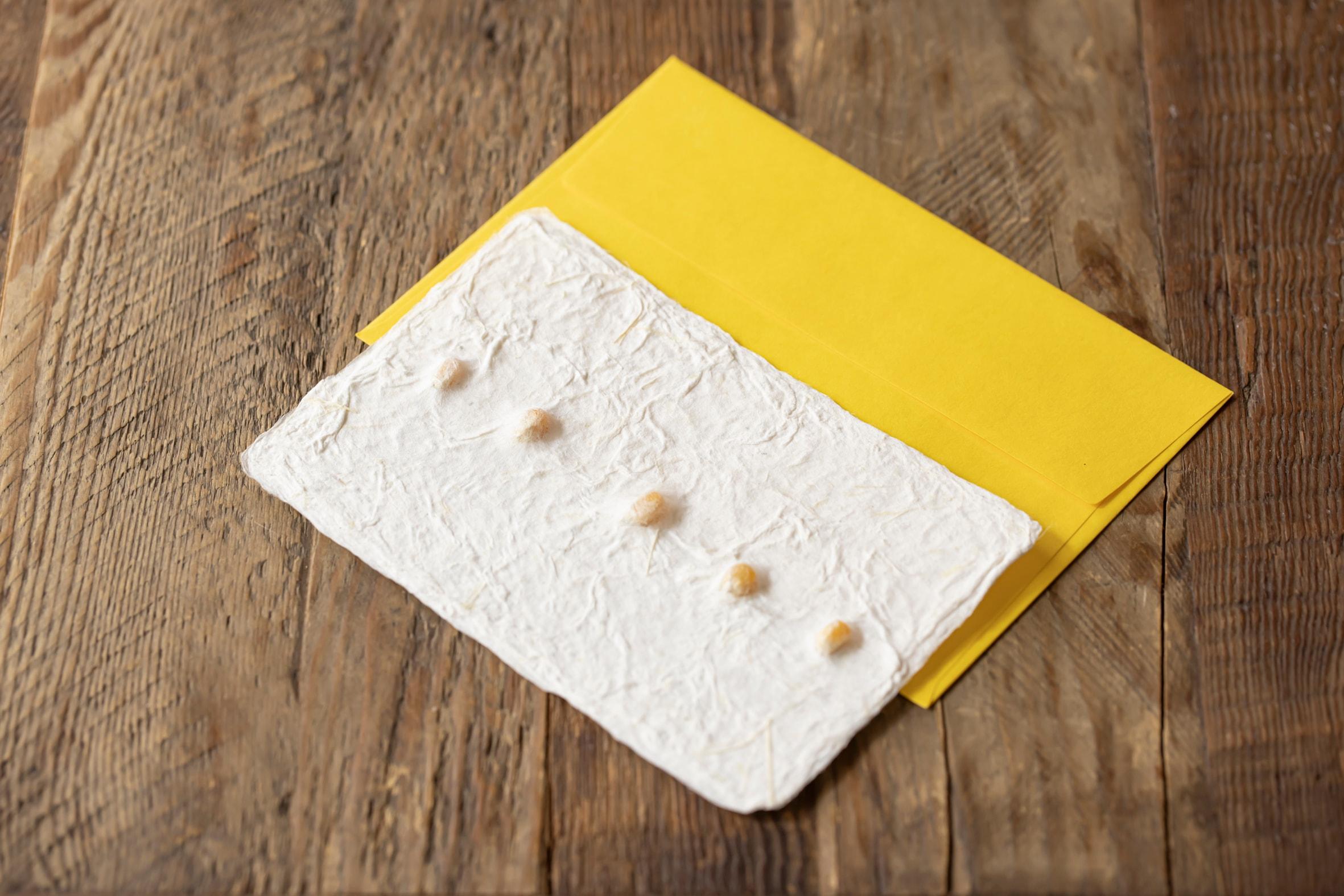 蝦夷和紙工房 紙びよりの「北のおたよりカード(とうきび)」,プレゼントにもぴったりのレターセット