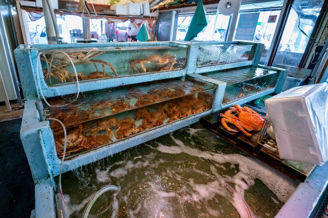 函館朝市にある船岡商店の店内,水槽の中で泳ぐタラバガニと毛蟹
