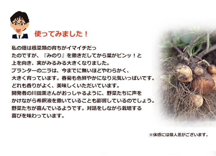 みのり - 石のしずく
