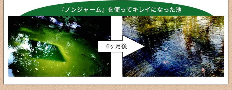 ノンジャームを使ってキレイになった池