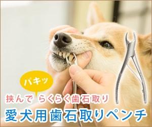 歯石取りペンチ