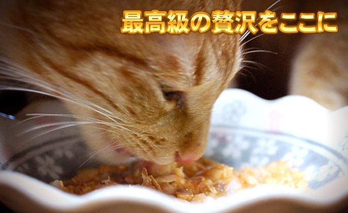 Schesir(シシア)/キャット