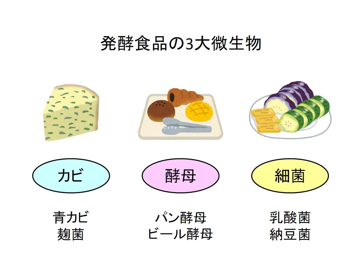 発酵食品の3大微生物 カビ 酵母 細菌