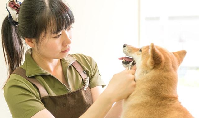 記事 愛犬の歯石を放置できない理由
