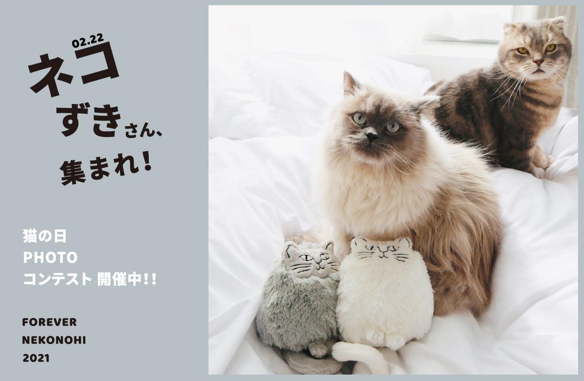 猫の日 コンテスト