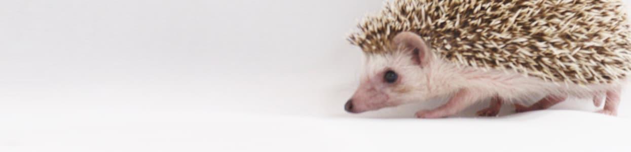 小動物用品