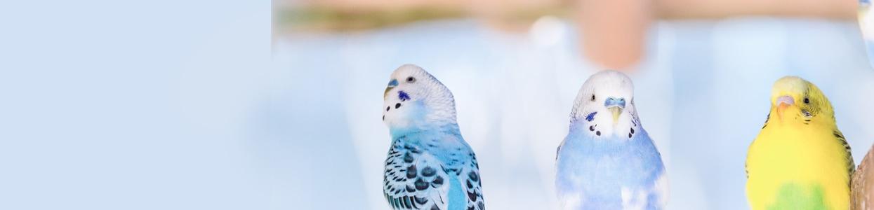 鳥かご・ケージ