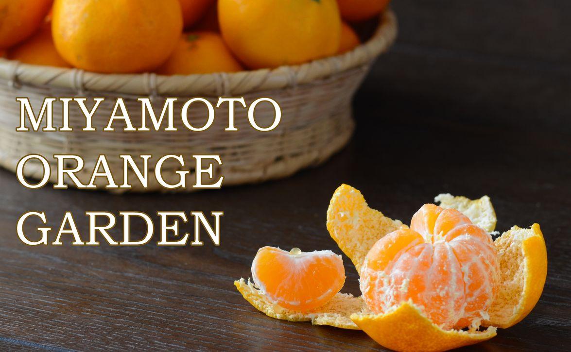 ミヤモトオレンジガーデン関連商品