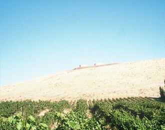 イメージ画像:雑穀の収穫