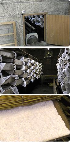大谷石造りの麹室、麹室の中は、繁殖中の米が敷かれた木箱がずらりと並ぶ、3日間培養してできた真っ白の麹