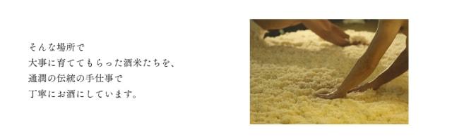 純米吟醸酒 蝉 画像3