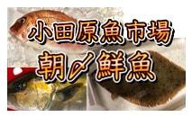 小田原朝〆鮮魚