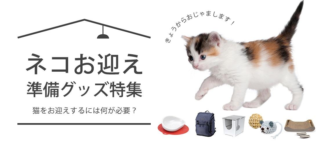 ネコお迎え準備グッズ特集