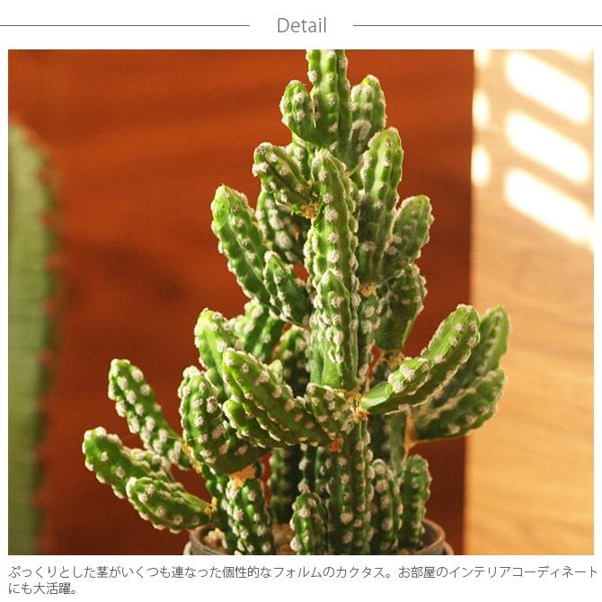 Brown. ブラウン フェイクグリーン カクタスポット 32  観葉植物 フェイクグリーン イミテーションフラワー 造花 ディスプレイ ボタニカル 植物 多肉植物 インテリア おしゃれ