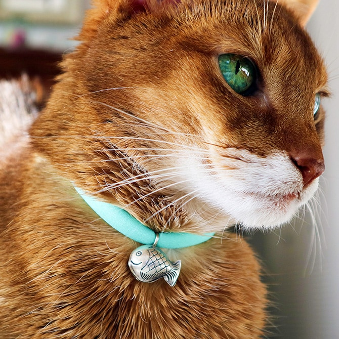 猫の首輪 Luce Bell ルーチェ ベル