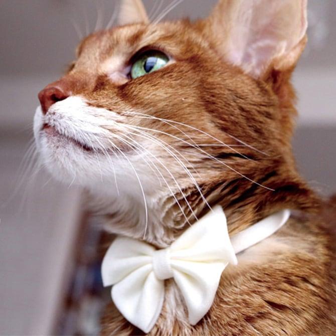 猫の首輪 Luce Ribbon Pastel ルーチェ リボン パステル