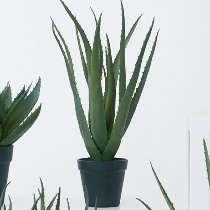 Brown. ブラウン アロエベラ ポット 48   観葉植物 フェイクグリーン 造花 アロエ ポット 鉢 おしゃれ リアル 多肉植物 インテリア