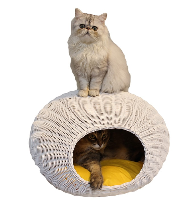 N4-style ラタンエッグハウス  猫用 ベッド ペットベッド ラタン ホワイト ハニー 上品 可愛い 卵型 コクーン