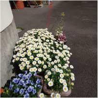 ウモガ 野の花 スノーポール