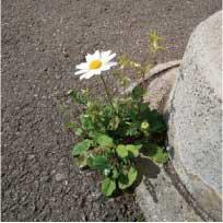 ウモガ スノーポールと草花