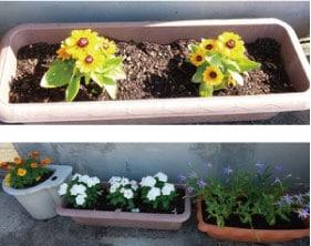 ウモガ ブログ プランターのお花たち