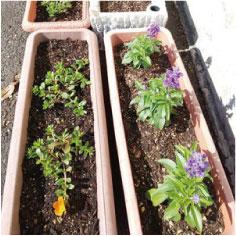ウモガ ブログ 植え込みの花たち
