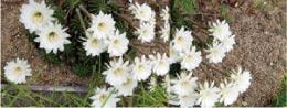 ウモガ ブログ サボテンの花