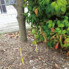 ウモガ ブログ ウモガの植え込み 彼岸花 遅咲き