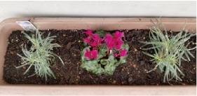 ウモガ ブログ 鉢植え