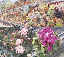 ウモガ ブログ 温室栽培