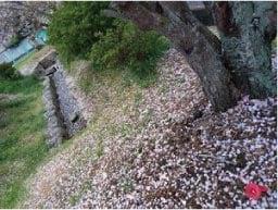 ウモガ ブログ 桜吹雪 さくら
