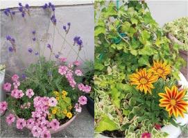 ウモガ ブログ 鉢植え 花