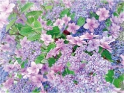 ウモガ ブログ 紫陽花 アジサイ 花