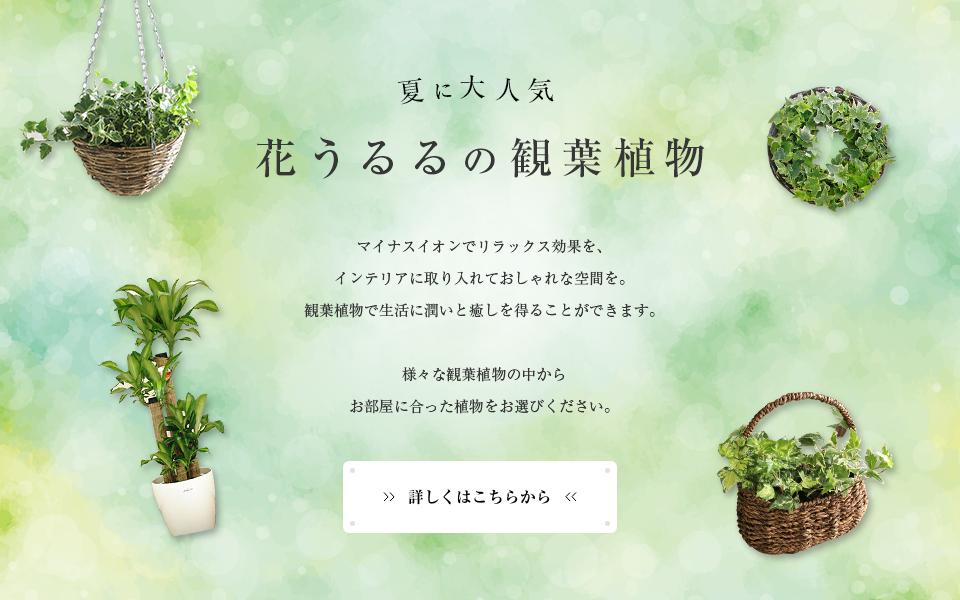 花うるる観葉植物