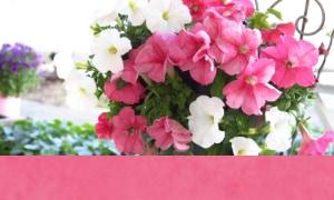 母の日 カーネション以外のお花