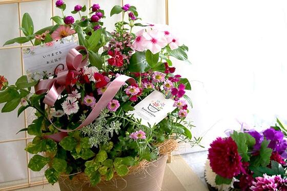 【送料無料】花うるるの敬老の日アレンジver.S