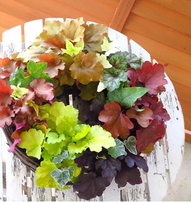 【リースの寄せ植え】大人気カラーリーフ「ヒューケラ」のリース型寄せ植え