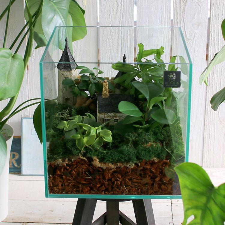送料無料 観葉植物 [テラリウム Lサイズ] (ミニ観葉×4) (ガラス ケース インテリア 完成品 観葉植物 モダン アクアリウム おしゃれ 水槽 開店祝い 新築祝い