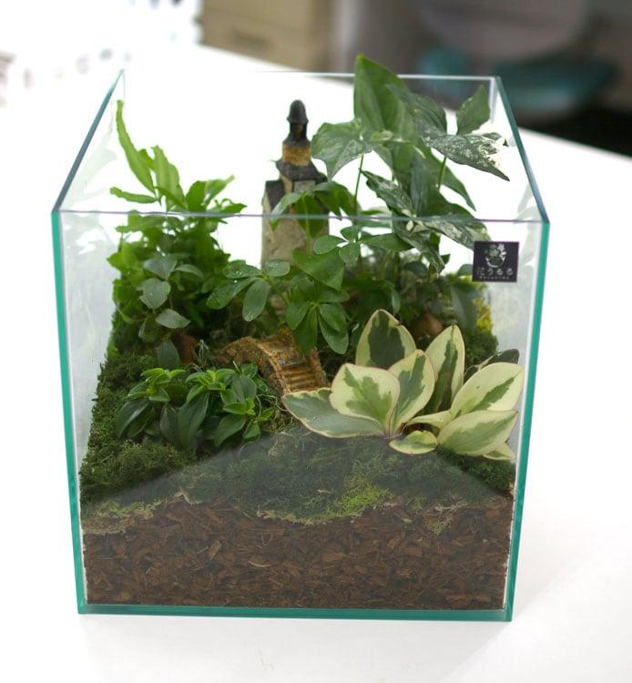 送料無料 観葉植物 [テラリウム LLサイズ] (ミニ観葉×7) (ガラス ケース インテリア 完成品 観葉植物 モダン アクアリウム おしゃれ水槽
