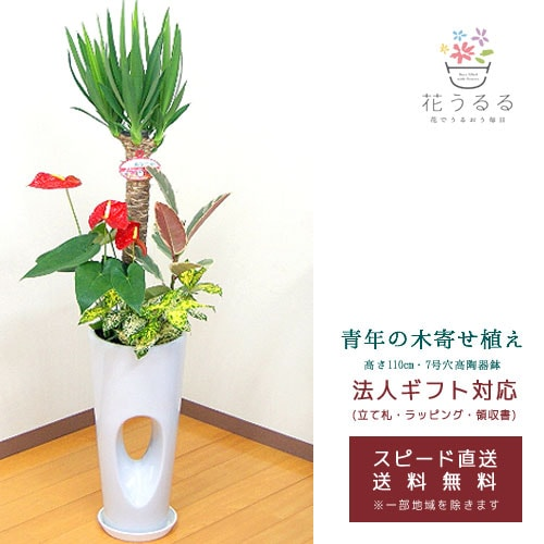 観葉植物 寄せ植え(ユッカ)7号穴高陶器鉢|(白赤黒) 高さ約1.1m 【kan-yosey07-00123】 開店祝い 新築祝い 誕生日プレゼント 引越し祝い インテリア おしゃれな植木鉢 送料無料