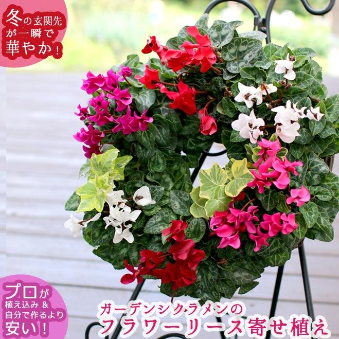 【ガーデンシクラメンのハンギング*リング】
